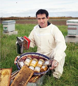 aldo-abeille-de-re