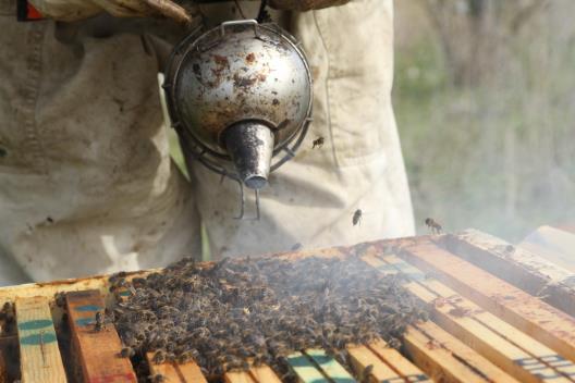 enfumoir-abeille-de-re