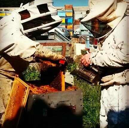 ruche-homme-abeille-de-re